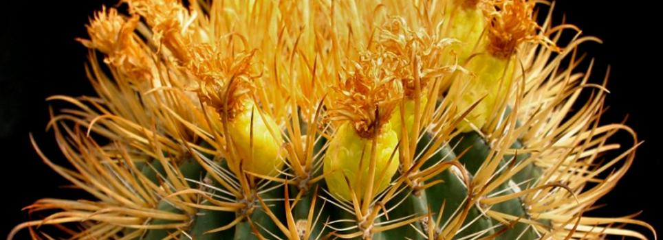 Cactus y bonsai for Vivero feroxcactus